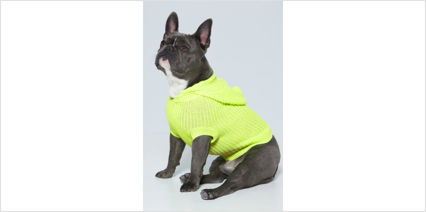 Neon Yellow Dog Hooded Jumper from Studio