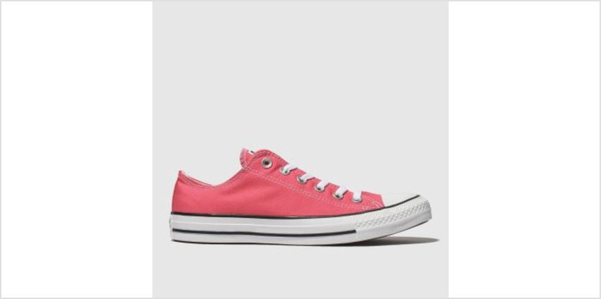 Converse Pink All Star Ox Womens Trainers from Schuh
