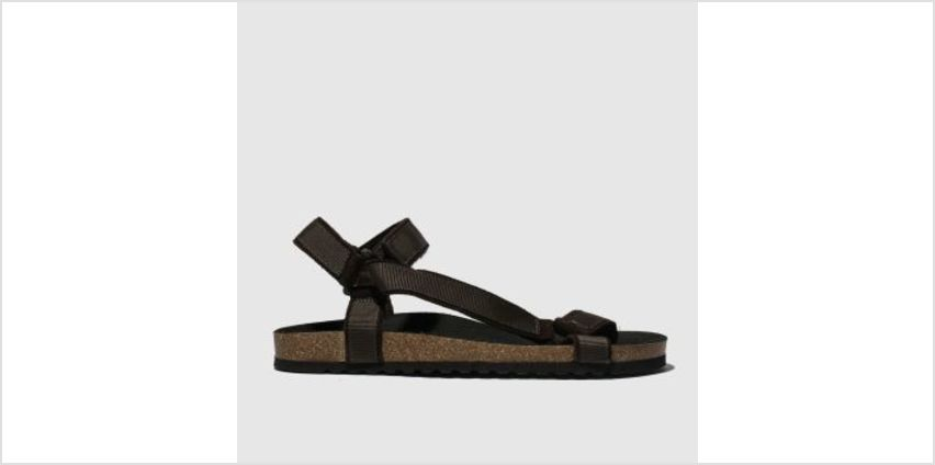Schuh Brown Trekker Sandal Mens Sandals from Schuh