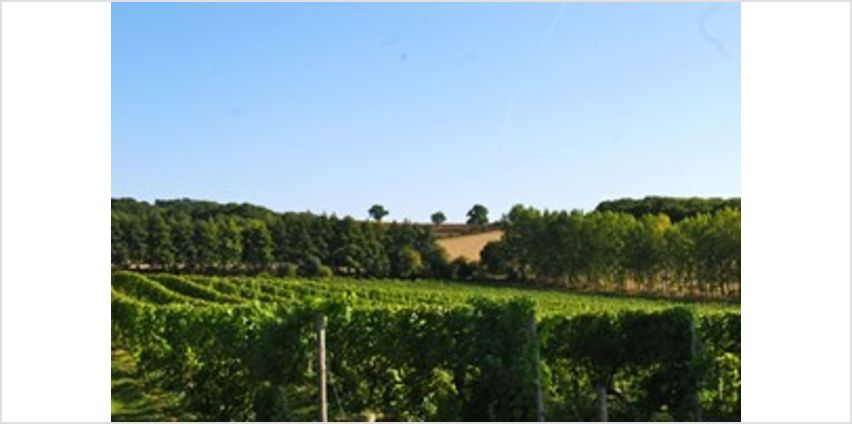 Chilford Hall Vineyard Tour and Tasting with Lunch for Two in Cambridgeshire from Buy A Gift