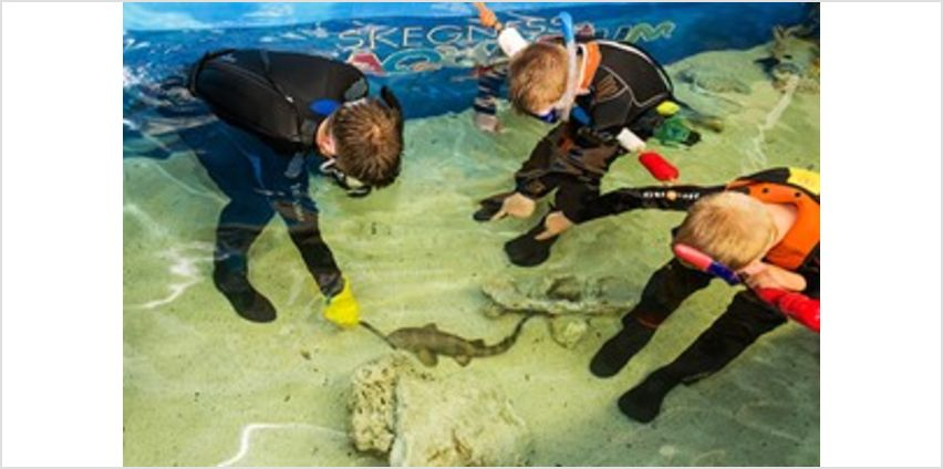Family Snorkelling and Entry at Skegness Aquarium from Buy A Gift