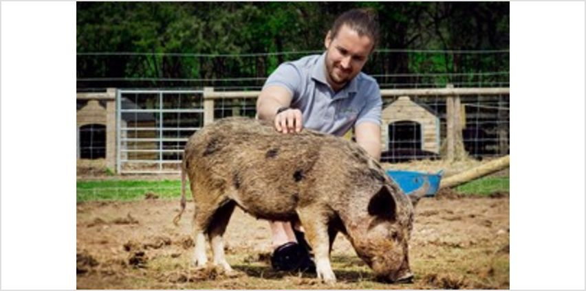 Pig Enthusiast Experience for Two at Kew Little Pigs from Buy A Gift