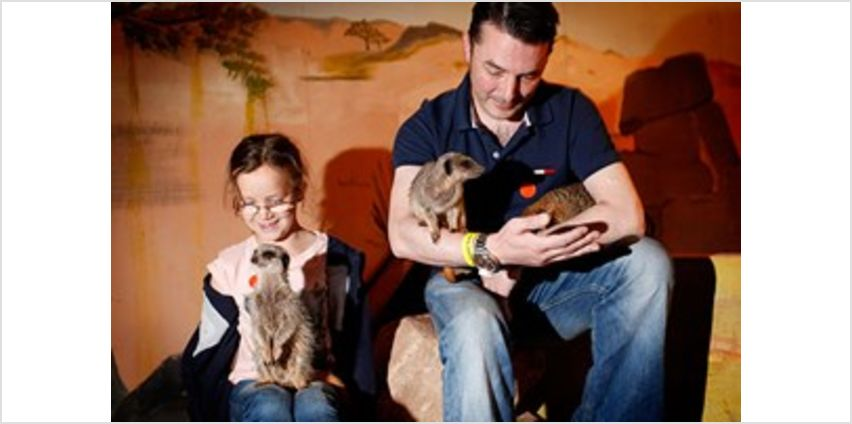 2 for 1 Meet The Meerkats Experience from Buy A Gift
