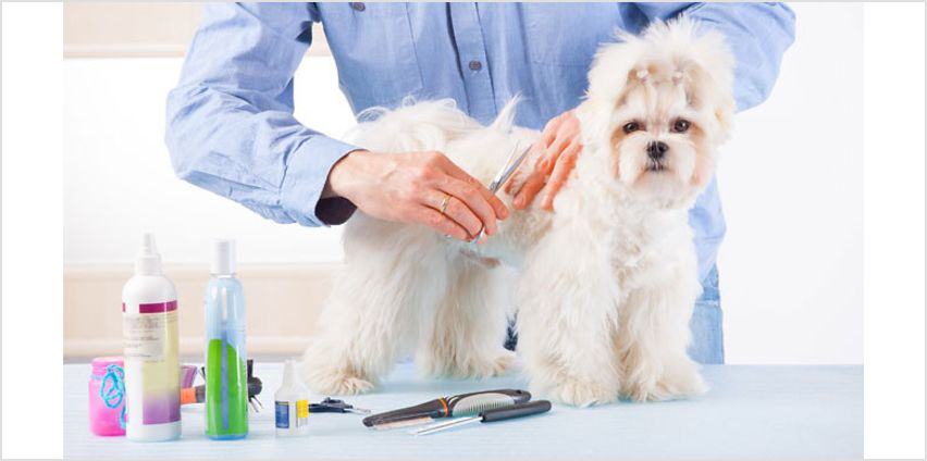 Animal Grooming Online Course from GoGroopie