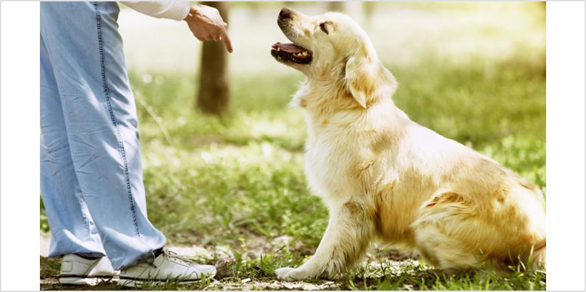 Mastering Dog Training and Care Online Course from GoGroopie