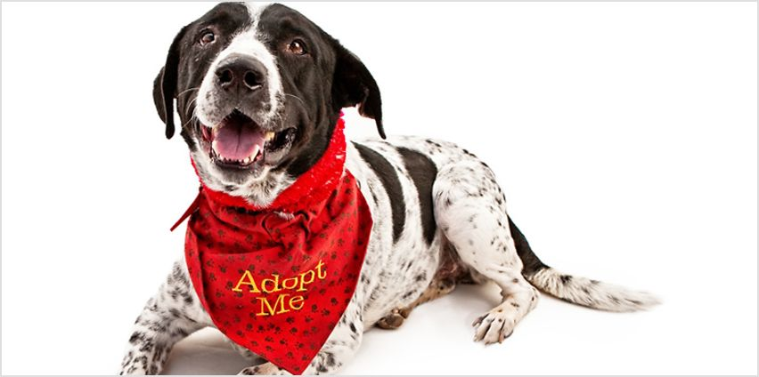 Preparing For Pet Adoption Online Course from GoGroopie