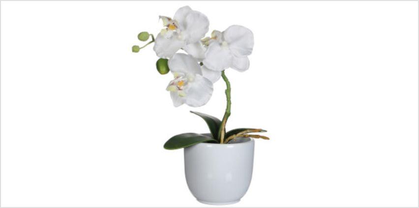 Phalaenopsis Pot - Tusca White from I Want One Of Those
