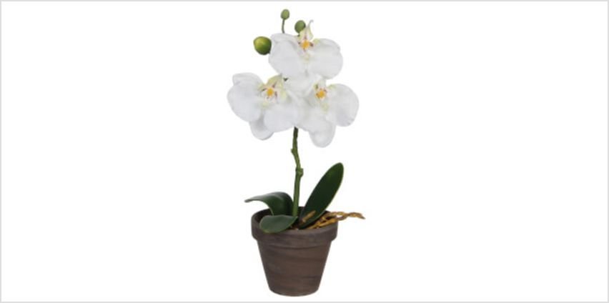 Phalaenopsis Pot - Stan Grey from I Want One Of Those