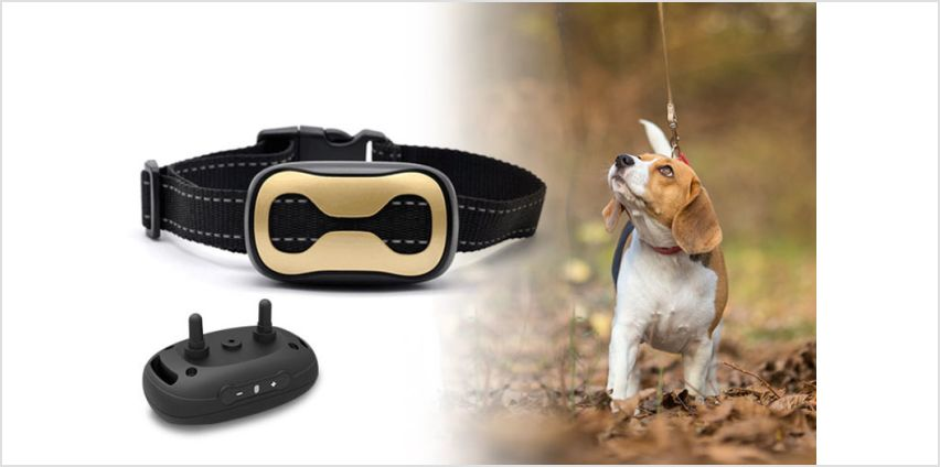 £12 instead of £29.99 (from Direct Xpress) for an anti-bark dog collar – save 60% from Wowcher