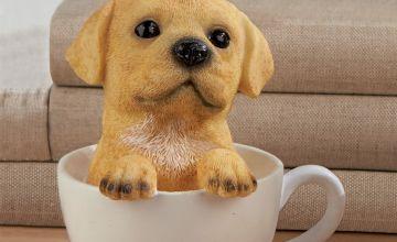 Labrador Teacup Dog
