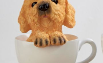 Cockapoo Teacup Dog