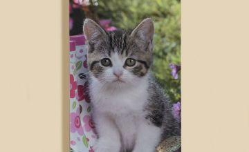 Small Slim Kittens 2020 Calendar