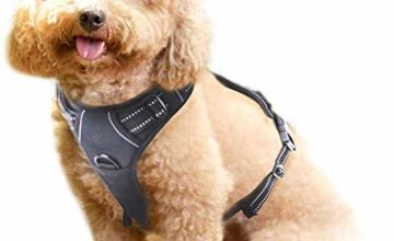 rabbitgoo Adjustable Refletive Dog Harness No-Pull Outdoor Pet Vest with Handle Easy Control