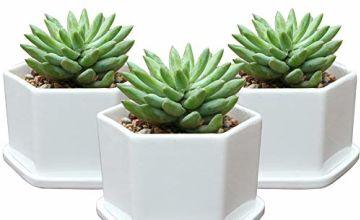 EPGardening White Ceramic Geometric Succulent Planters Moder