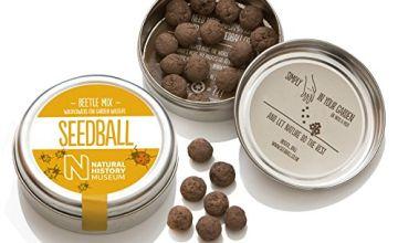 Seedball Beetle (20pc)
