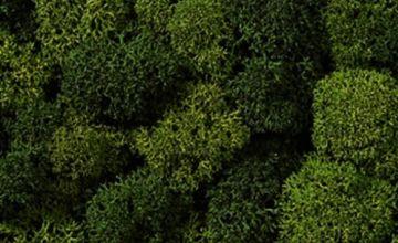Noch 08621 Lichen Green Mix Assorted Landscape Modelling