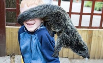 2 for 1 Binturong Experience for Two at Hoo Farm Animal Kingdom