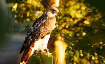 2 for 1 Half Day Falconry Experience with Coda Falconry