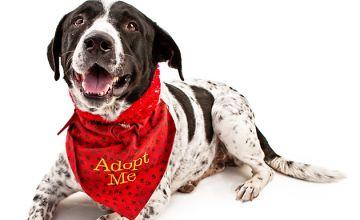 Preparing For Pet Adoption Online Course