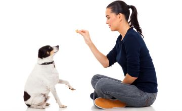 Dog Behaviour and Training Online Course