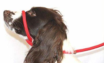 Dog & Field Figure 8 Anti Pull Lead / Halter / Head Collar (