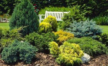 £29.99 instead of £62.95 (from PlantStore) for a collection of five dwarf conifers – save 52%
