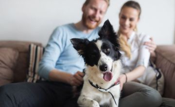 £14 for an online animal psychology course from Holly & Hugo