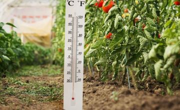 £2.98 instead of £10.99 for a jumbo garden thermometer from Avant-Garde Brands Ltd - save 73%