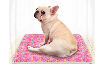 From £4.99 instead of £29.99 (from WowWhatWho) for a soft cushion pet blanket - choose from four sizes and save up to 83%