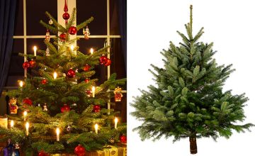 From £25 (from BloomingDirect) for a 1.4m Nordmann Fir cut Christmas tree!