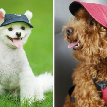 £4.99 instead of £18 (from Secret Storz) for a dog baseball cap – choose from five colours and four sizes and save 72%