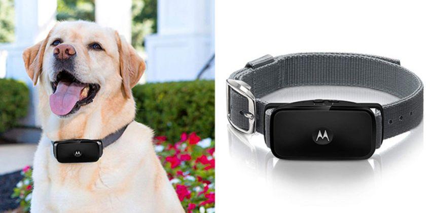 £24.99 instead of £50 (from Trojan Electronics) for a Motorola Bark ultrasonic anti-bark collar –save 50%  from Wowcher