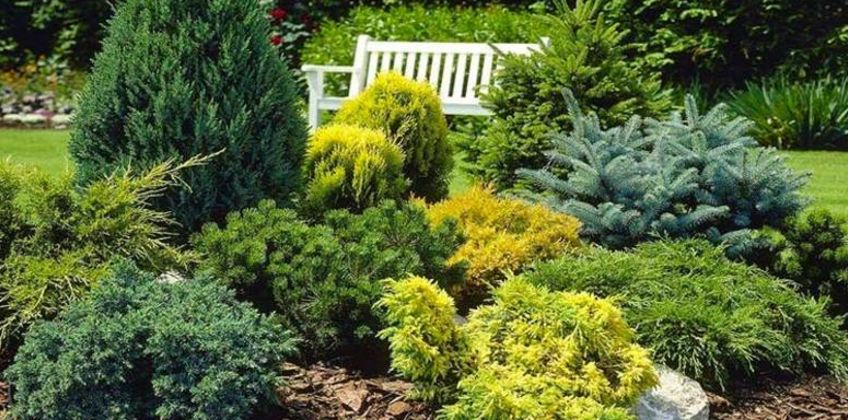 £29.99 instead of £62.95 (from PlantStore) for a collection of five dwarf conifers – save 52% from Wowcher