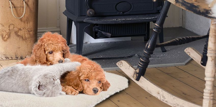 £6.99 instead of £26.99 (from Avant Garde) for a large magic pet thermal fleece heating bed - save 74% from Wowcher