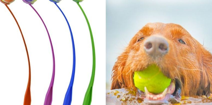 £6.99 instead of £12.99 for a dogs' tennis ball launcher - choose from four colours from GameChanger Associates - save 46% from Wowcher