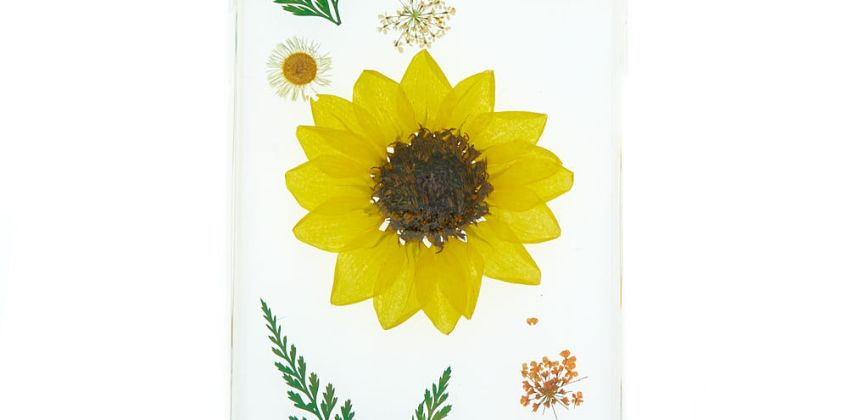 Go to Product: Sunflower Pressed Flower Phone Case - Fits iPhone 6/7/8 Plus from Claires
