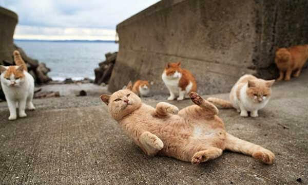 ilha dos gatos 01