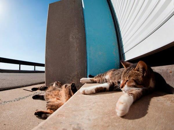 ilha dos gatos 010