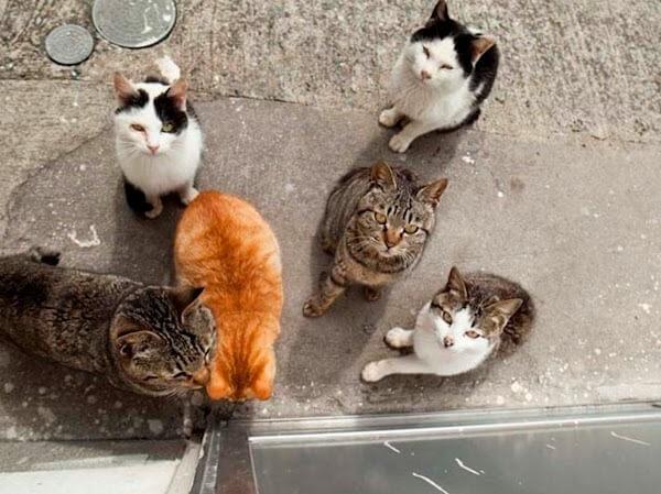 ilha dos gatos 04