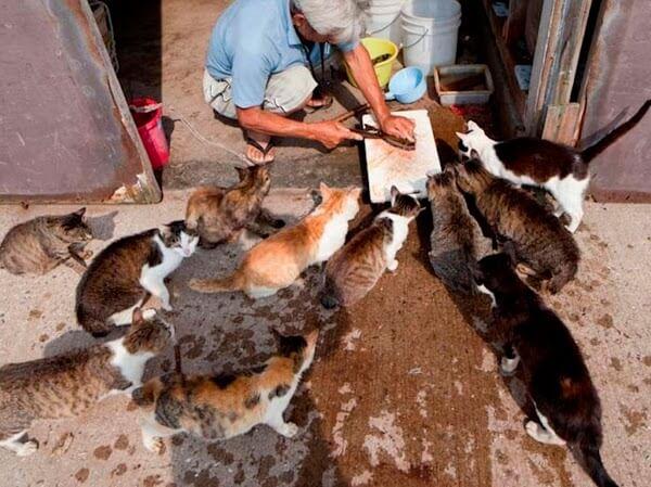 ilha dos gatos 05