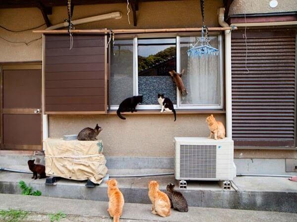 ilha dos gatos 09