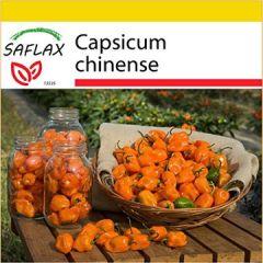 Set Chili Gelbe Habanero 10 Samen Mit Mini-Gewächshaus, Anzuchtsubstrat und 2 Töpfen Capsicum chinense