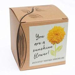 """Geschenk-Anzuchtset""""Sunshine Flower"""" Teddybär Sonnenblume"""