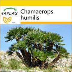 Set Zwergpalme 10 Samen Mit Mini-Gewächshaus, Anzuchtsubstrat und 2 Töpfen Chamaerops humilis