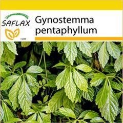Set Pflanze der Unsterblichkeit 30 Samen Mit Mini-Gewächshaus, Anzuchtsubstrat und 2 Töpfen Gynostemma pentaphyllum
