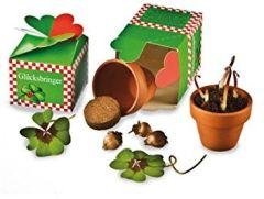 Das Glück aus der Schachtel - Anzuchtset mit vierblättriges Kleeblatt