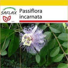 Set Heilpflanzen Passionsblume 5 Samen Mit Mini-Gewächshaus, Anzuchtsubstrat und 2 Töpfen Passiflora incarnata
