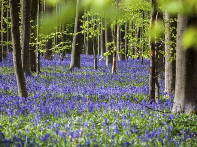 Spännande rön: Skogen skyddar dig mot farliga sjukdomar | LAND.se