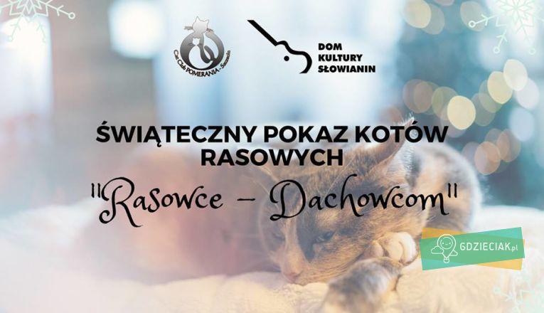 """Świąteczny Pokaz Kotów Rasowych """"Rasowce-Dachowcom"""" - atrakcje dla dzieci w Szczecinie"""