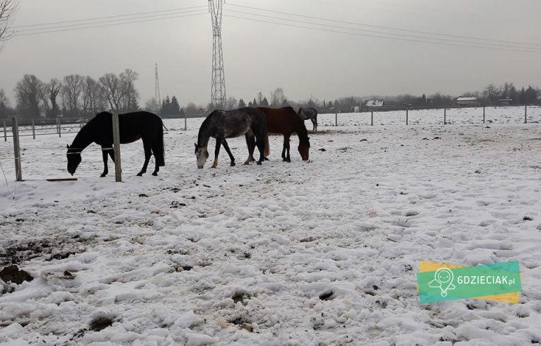 Szacecin dla dzieci: Półkolonie zimowe w Folwarku Podkowa